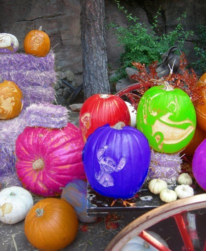 Purple pumpkin eaters rejoice
