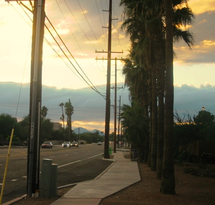 More palm trees at sunset.