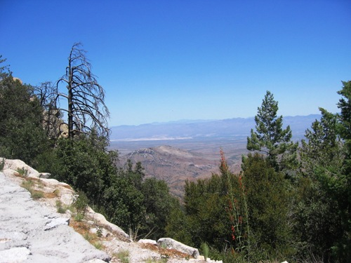 Mount Lemmon is beautiful, and cooler, but rather dry this time of year.