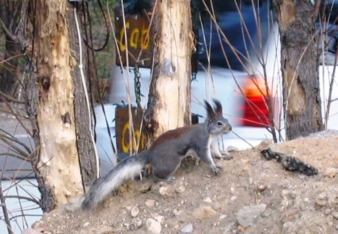 Abert's Squirrel extends a belated welcome.