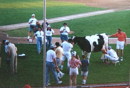 cow milking contest, 1996
